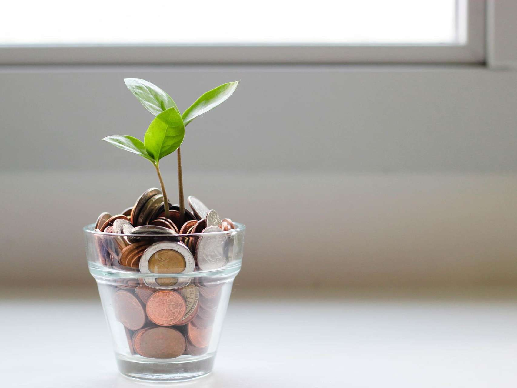 Plant growing out of a glass filled with coins